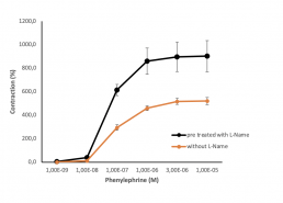 Concentration response curve with phenylephrine In the presence or absence of L-Name